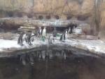 Akron Zoo Date