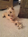 Puppy Peek-A-Boo