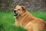 Important Steps For Preventing Obesity In Dogs