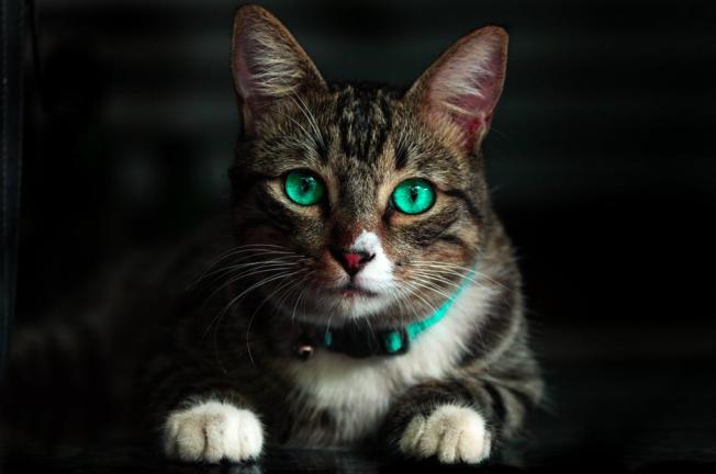 cattt1