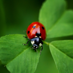 Little Ladybug Friend