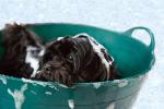 Pavlovian Conditioner: Grooming Hacks For Pet Owners