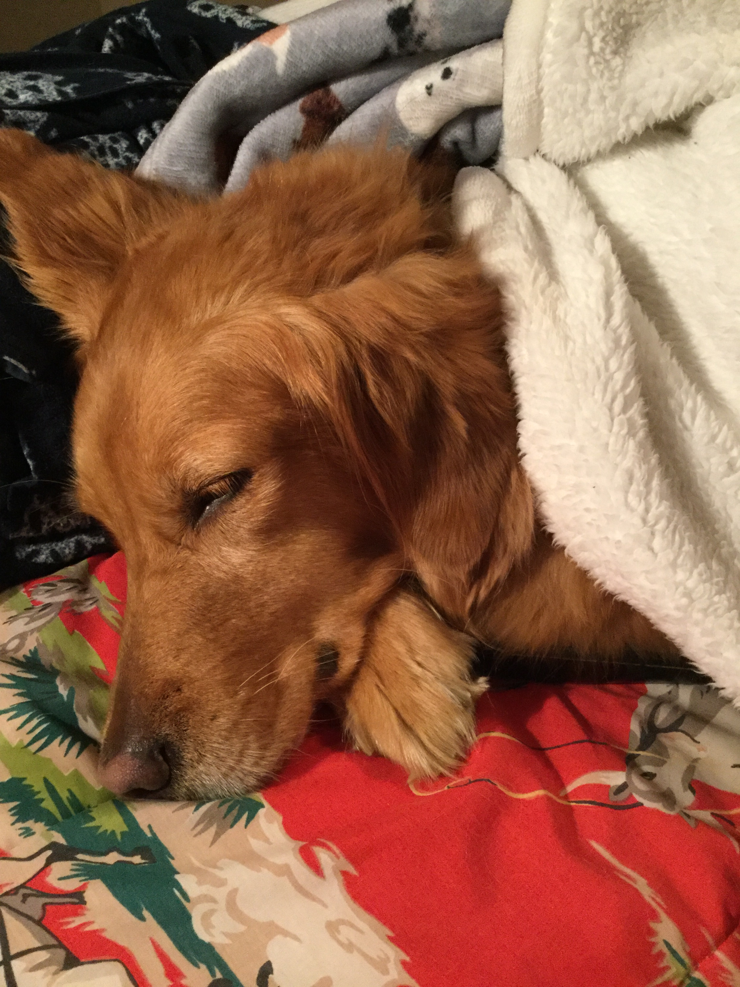 sleepypups1