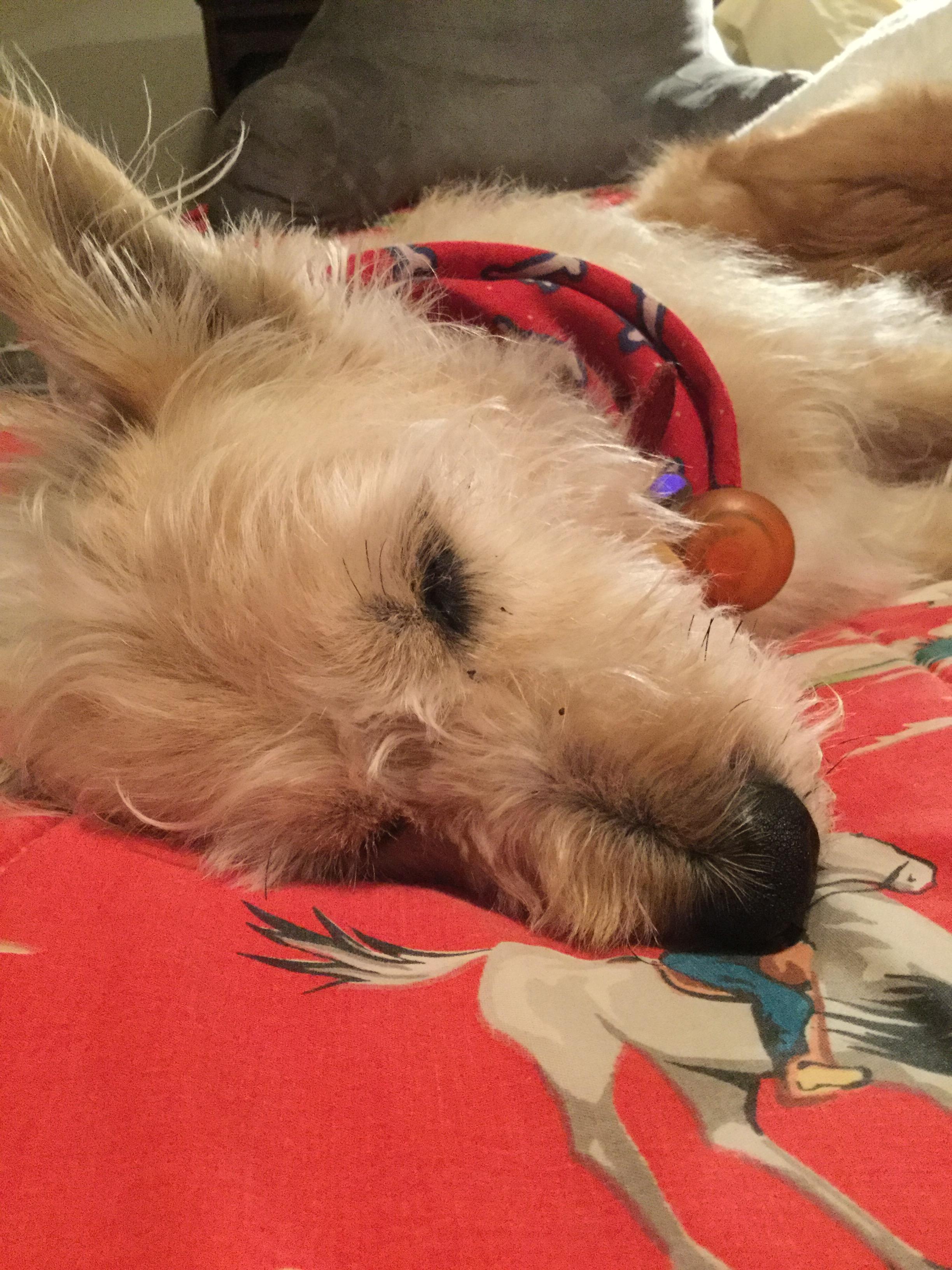 sleepypups2