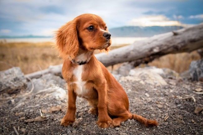 puppyy1