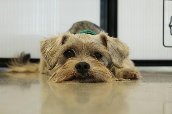 dogg1