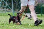 The Most Important Aspects Of Training Your Dog