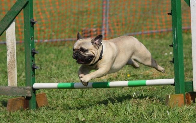 doggie1
