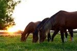 Tips For The Best Ways To Feed YourHorse