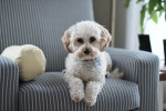 Taking Care Of A Dog When Practicing Social-Distancing