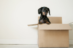 Avoid Moving Day Chaos With These Practical Tips