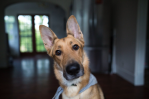 What Makes Your Dog Tilt Its Head AtYou?