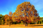 Caring For The Trees In Your Garden