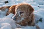 Protecting Your Dogs In Winter Weather