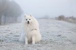Doing Right By Your Dog This Winter