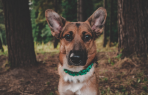 4 Things Your Dog Needs Beyond Food And Water