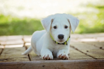 5 Things They Don't Tell New DogOwners