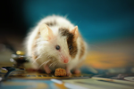 How To Discourage Rodent Pests In YourHome