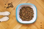 What To Look For In The Dog Food YouChoose