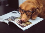 Tips For Taking Care Of Your Dog's Diet AtHome