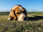 What To Do When Your Pet Has DogFlu